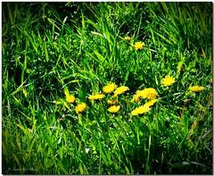 acne herbs?