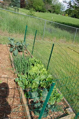 Garden 053108-04