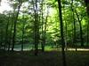 verde a percedol