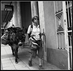 s/t (mdvagua) Tags: k10d bn burro camino asno aficinonados aficionados marianodelvalle