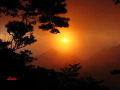 Huang Shan (Yellow Mountain) sun rise 3a (Linda230 / busy) Tags: china trees mountain yellow pine shan silhoutte huang  golddragon spectacularsunsetsandsunrises