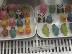 candy panda!