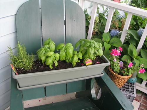 1st Herb garden!