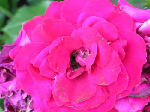Kukka lähikuvassa