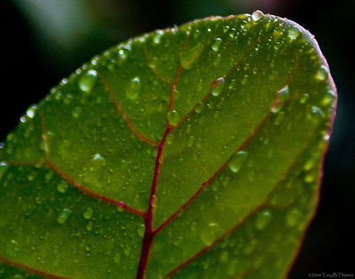 20080815_LeafWaterdrops1