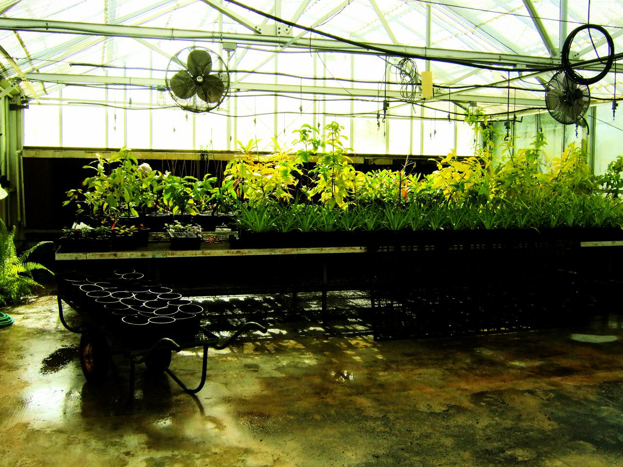 center for tropical plant conservation