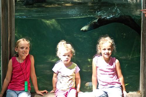 Erie Otter