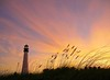 Cape Florida Lighthouse after the Sunset (asawaa) Tags: pink sunset sky lighthouse color nature topc25 clouds reeds landscape seaside florida miami landmark shore seashore keybiscayne cirrus seaoats southflorida billbaggscapefloridastatepark southfloridasky billbaggsstatepark capefloridalighthouse capefloridalight qualitypixels damniwishidtakenthat miamiclouds
