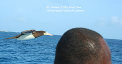 bird pic from smiths ferry boat (loveli_one28) Tags: travel flowers st islands airport view thomas united ships virgin beaches waters british caribbean states tortola pristine