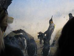 IMG_0659 (tdmyers) Tags: family nature girl animals zoo indianapolis sharks aquaticlife kamdyn funkamdyn