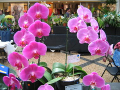 Coffs Harbour orchids display 2 (Pip_Wilson) Tags: flowers orchid orchids coffsharbour