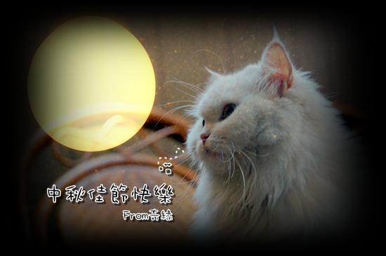 【貓季】叮叮中秋賀卡