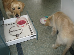 Dogs eating breakfast