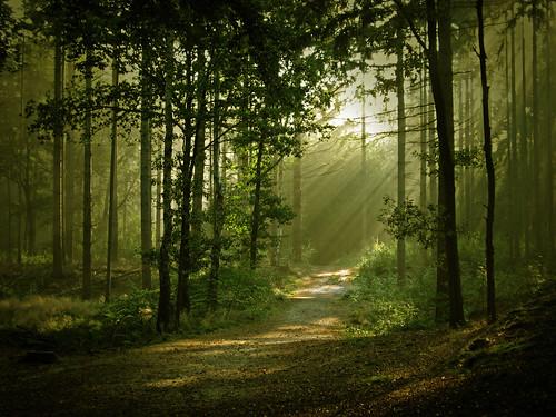 Forest por Vineyards.