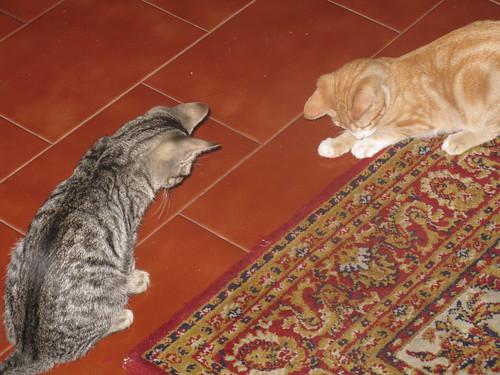 Luna & Tico