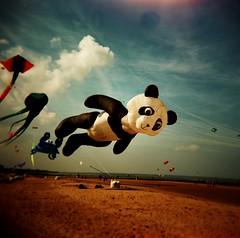 Panda. (DJ Bass) Tags: 6x6 film mediumformat holga kites bigsky margate kitefestival shotonfilm 500x500 popularphotography giantkites 25faves 200850plusfaves updatecollection margateinternationalkitefestival