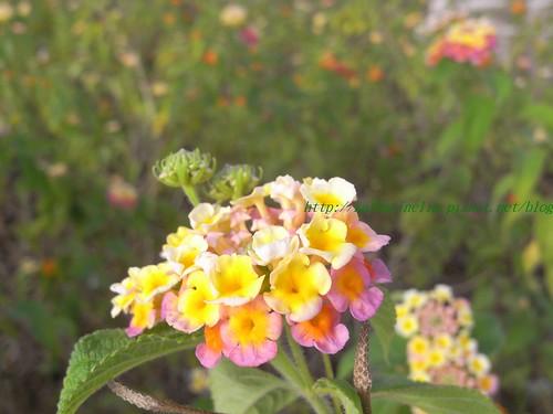 你拍攝的 美麗小花。
