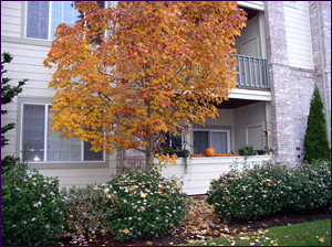 apartment patio in fall