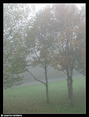 #22 November 4 (lisannekerstens) Tags: road mist holland tree fog utrecht nederland thenetherlands boom weg project365 nederlandvandaag
