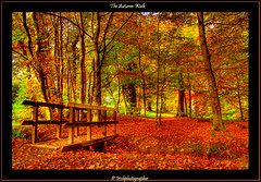 The Autumn Walk (Irishphotographer) Tags: autumn trees ireland sunset art history fall sunshine landscape oak view celtic sureal hdr irishart kinkade beautifulireland hdrunlimited irishphotographer colorphotoaward besthdr imagesofireland colourartaward picturesofireland pentaxk20d irishphotographerkimshatwellireland irishcalender09 calendarofireland breathtakingphotosofnature beautifulirelandcalander wwwdoublevisionimageswebscom