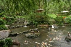 三富花園農場:魚鴨鵝