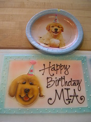 HB Mia DOG