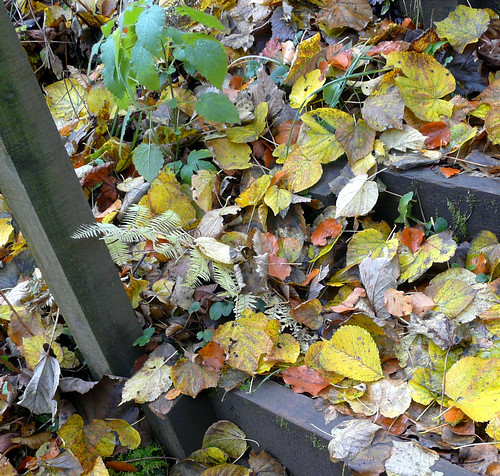 Leaves on steps 15Nov08