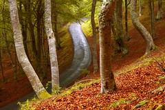 Finding the way (Ignacio Lizarraga) Tags: road autumn trees forest way landscape arboles camino carretera paisaje nikond50 bosque otoo euskalherria euskadi basquecountry hayas beechtrees zyber superaplus aplusphoto