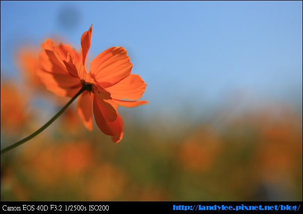 9711-新社花海:Date with Bee_090.jpg