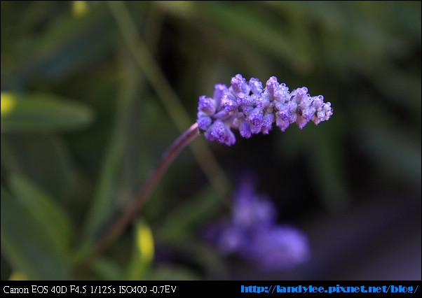9711-新社花海:Date with Bee_024.jpg