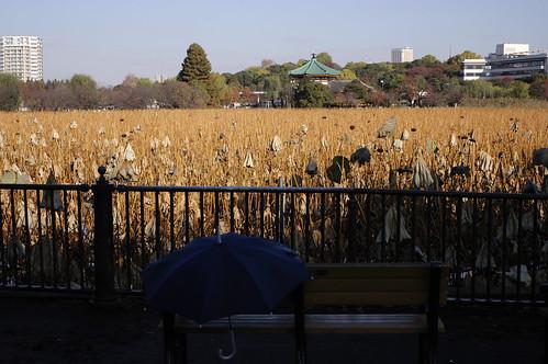 上野・水辺の風景
