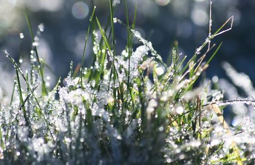 iced grass...