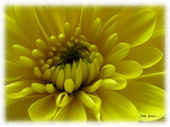 Golden flower! (fdphotolover) Tags: flower color macro beautiful yellow canon golden colorful details yellowflower s2is distillery greatphoto canons2is goldenflower fav10 view200 fotocompetition fotocompetitionbronze novavitanewlife greatshotss