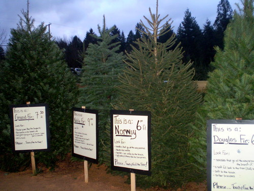 Christmas Tree Search at Dogwood Farm
