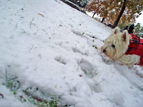 El perrón y la nieve