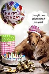 Hallmark Card Idea (morgan.laforge) Tags: dog colors ribbons funny candles bright humor celebration happybirthday aging bows festivecrap