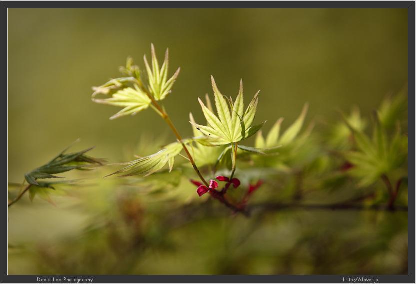IMAGE: http://farm4.static.flickr.com/3162/3431688380_2694534068_o.jpg