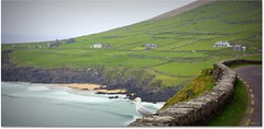 Admiring the view ! (Mick H 51) Tags: ocean road ireland sea green bird beach canon landscape dingle kerry atlantic munster dunquin sleahead clogherhead thekingdom greengreengrassofhome 450d fortyshadesofgreen mickh51 dinglepeninsulsa