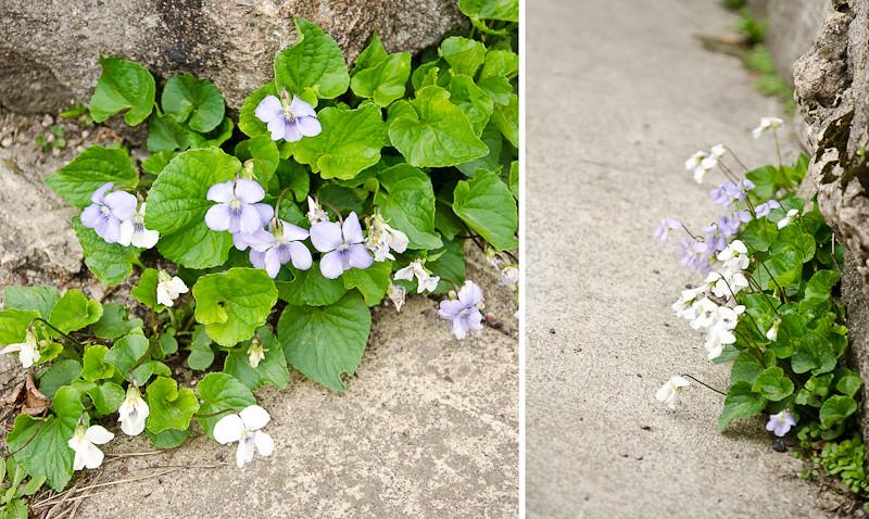 20110502-flowers and playground-232-Edit