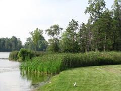 Cattails by the Lake (TrueWolverine87) Tags: trees plants lake grass michigan cattails wetlands flint flintriver mottlake geneseerecreationarea