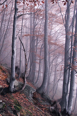 Where Dragons Live (AIeksandra) Tags: forest trees mist magic fairytales atmospheric imaginative lifeinthemountains wild mysterious