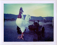 (moominsean) Tags: sunset arizona chicken polaroid sweet congress hugecock type669 1450 colorpackiii polacolor outwithsolexposure expiredjan99 pullingstuff