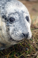 nearlygrownup (Janey M) Tags: seals donnanook