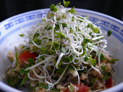 Cilantro tabouleh with sprouts