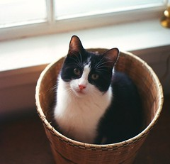 Mr.B in the Basket (marilyn2d) Tags: portrait pets cute cat kitty catportrait kissablekat 5prettykittycommentspartiv