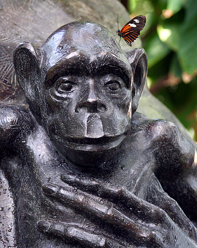 Small Postman Monkey