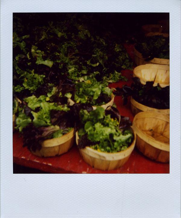 may18: lettuce
