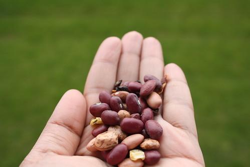 Click-lentils 011