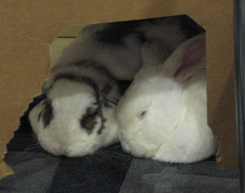 betsy and gus snuggling