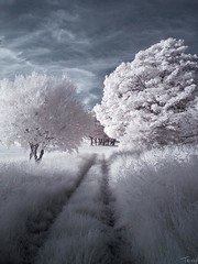 Dreamland (tricky (rick harrison)) Tags: trees tree golf ir woods track path south leeds course infrared dreamland middleton leadinglines ls11